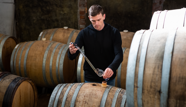A young handsome male winemaker sampling from white wine barrels.